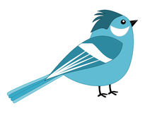 A beautiful blue sparrow Stock Photo
