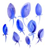 Beautiful blue tulips on a white background. Watercolor. Beautiful blue unopened tulips on a white background. Watercolor Royalty Free Stock Photography
