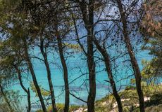 Beautiful blue turquoise sea and high conifer trees stock images