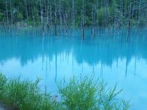 Beautiful blue water of Shirogane Aoi Ike or Blue Pond in Biei, Hokkaido Royalty Free Stock Images