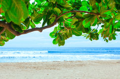 Beautiful blue waters of Hawaii seen through green leafy branch Stock Photos