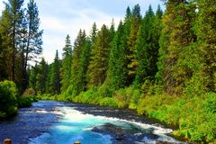 The Metolius river runs thur a lush forest. Beautiful blue waters swirl around in the Metolius River along a lush green forest Royalty Free Stock Photos