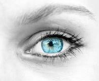 Beautiful blue woman eye stock photography
