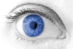 Beautiful Blue woman eye macro shot Royalty Free Stock Image