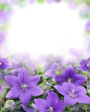 Beautiful bluebells on blurred background royalty free stock photo