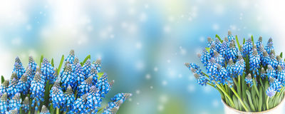 Beautiful blur background with blue flowers Royalty Free Stock Images
