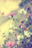 Beautiful blur background with tender flowers Stock Image