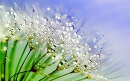 Beautiful, Blur, Close-up Stock Photo