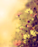 Beautiful blur retro background with flowers Royalty Free Stock Photos