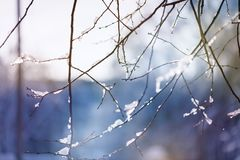 Beautiful blur winter background with ice and snow on branches stock image