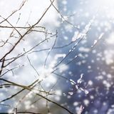 Beautiful blur winter background with ice and snow on branches stock photo