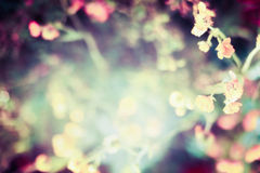 Beautiful blurred nature background with flowers, leaves Royalty Free Stock Photography