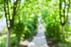 Beautiful blurred summer trees and walk in park stock photos