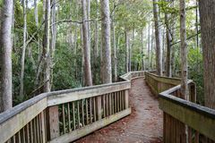 A beautiful boardwalk in Florida nestled in nature. A beautiful boardwalk in Florida that extends endlessly in one of the many beautiful city parks reminding of Royalty Free Stock Image