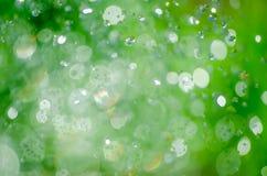Beautiful Bokeh on a Dim background greenery.  royalty free stock photography