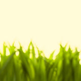 Beautiful bokeh green grass Stock Photos