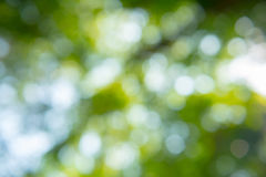 Beautiful bokeh nature for background Stock Photography
