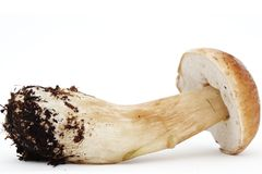 Beautiful boletus mushroom Stock Photography