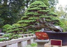 Beautiful bonsai Stock Photos