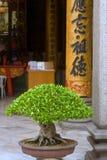 Kuala Lumpur, Chinatown, Chan She Shu Yuen Clan Ancestral. A beautiful bonsai with big caligraphy inside the temple Chan She Shu Yuen Clan Ancestral stock photography