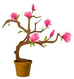 Beautiful bonsai with flowers Royalty Free Stock Photography