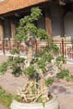 Beautiful bonsai in front of a palace royalty free stock photography