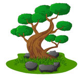 Beautiful bonsai tree isolated Stock Photo