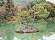Beautiful bonsai trees In a japanese style garden Stock Images
