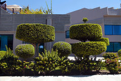 Beautiful bonsai trees and manicured bushes in garden Royalty Free Stock Photos