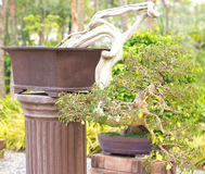 Bonsai trees. Is beautiful bonsai trees in pot Stock Image