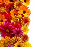 Beautiful border from fresh flowers Royalty Free Stock Images