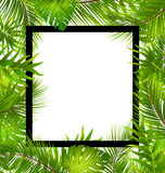 Beautiful Border with Tropical Palm Leaves Royalty Free Stock Photography