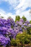 Beautiful, botanic garden in Spring. Stock Images