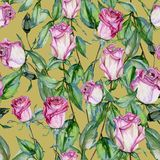 Beautiful botanical background with pink roses on stems with green leaves. Seamless floral pattern. Watercolor painting. Hand drawn and painted illustration stock illustration
