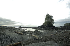 Beautiful Botanical Beach in Port Renfrew.Vancouver island Stock Image