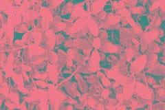 Beautiful botanical floral background. Teucrium Fruticans Azurea Germander shrub. Pink teal turquoise gradient. Vintage toned. Pattern ornament template for vector illustration