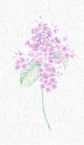 Beautiful botanical flower painting. Impressionist flower oil painting of lilacs in detail Royalty Free Stock Image