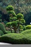 Green garden. Beautiful botanical garden in the center of city Stock Photos