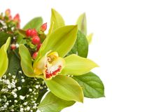 Beautiful bouquet. Royalty Free Stock Photo