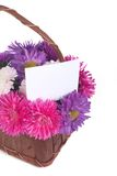 Beautiful bouquet of asters in a basket Royalty Free Stock Image
