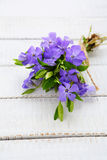 Beautiful bouquet of blue flowers Royalty Free Stock Image