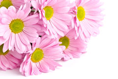 Pink flowers closeup Royalty Free Stock Image