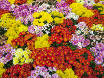 Beautiful bouquet of bright wildflowers Royalty Free Stock Image