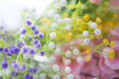 Beautiful bouquet of bright  wildflowers Stock Photos