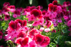 Beautiful bouquet of brightly colored flowers. royalty free stock images