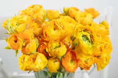 Beautiful bouquet buttercup in a glass vase on white background. colorful color mix flower Royalty Free Stock Images