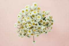 Beautiful bouquet of chamomile royalty free stock image
