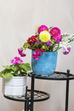 Beautiful bouquet of chrysanthemums  flowers in blue vase Royalty Free Stock Image