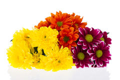 Beautiful bouquet of chrysanthemums isolated on white Royalty Free Stock Photo