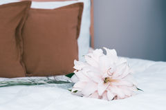 Beautiful bouquet of colorful flowers in interior. Of bedroom Stock Photo